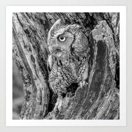 Echo the Screech Owl by Teresa Thompson Art Print