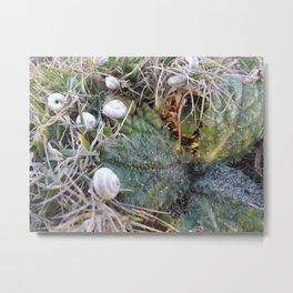 sleeping snails Metal Print