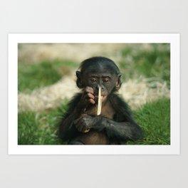 bonobo baby Art Print