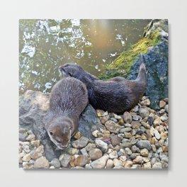 Otter twins Metal Print