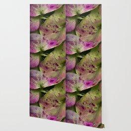 hydranjea pink and green Wallpaper