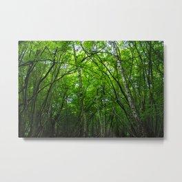 Hatfield Forest Metal Print