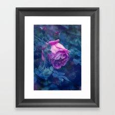 Blooming rose Framed Art Print