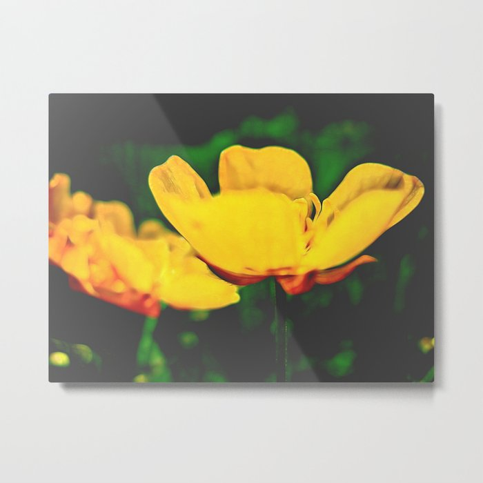 Midnight bloom Metal Print