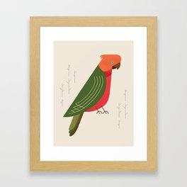 Australian King Parrot, Bird of Australia Framed Art Print