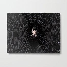 Spider Orb Weaver Metal Print