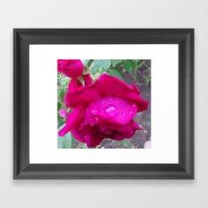 Rose Water Framed Art Print