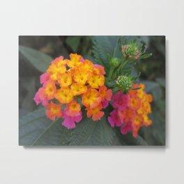 Flowers in Spain Metal Print