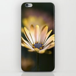 daisies in a row. iPhone Skin