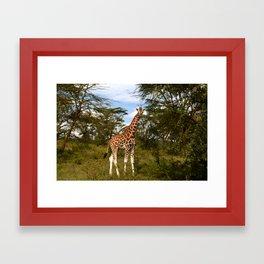 Nakuru Giraffe Framed Art Print