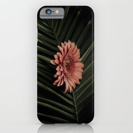 Tropical gerbera iPhone Case