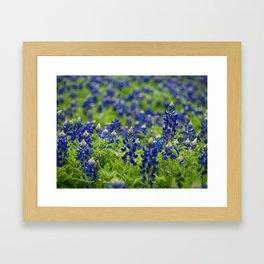 Bluebonnets-a-plenty Framed Art Print