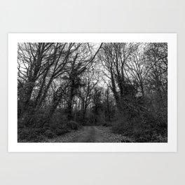 Monochromatic forest path Art Print