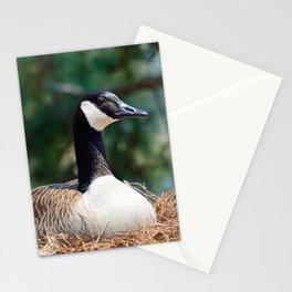 Nesting Canadian Goose Stationery Cards
