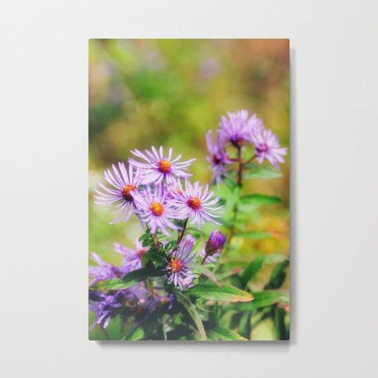 Purple Aster Metal Print