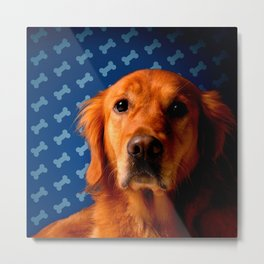 Golden Retriever blue bone background Metal Print