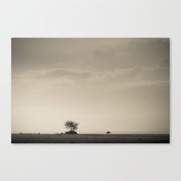 Lone Wildebeest grazing in South Africa Canvas Print
