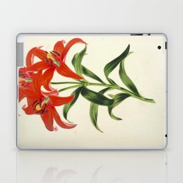 Lilium Sinicum Vintage Botanical Floral Flower Plant Scientific Laptop & iPad Skin