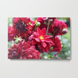 Blooming Red: Imperfectly Perfect Metal Print