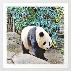 Panda at the San Diego zoo Art Print