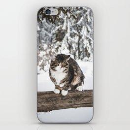 A Cat in Snow.    Animals of Poland.    Zakopane in Winter.    MadaraTravels iPhone Skin