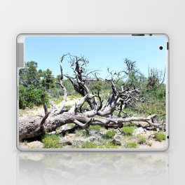 Gnarly Tree Laptop & iPad Skin