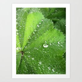 Rainy Garden Art Print