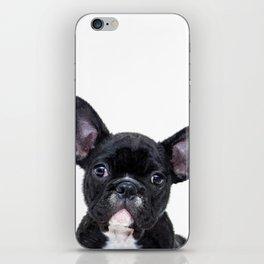French bulldog portrait iPhone Skin