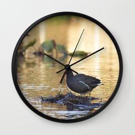 Birds from Pantanal Frango dagua Wall Clock