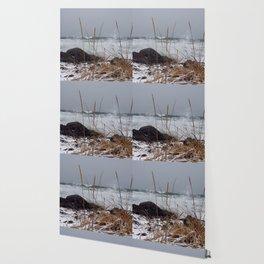 Winter surf Beachgrass Wallpaper