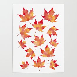 Maple leaves white Poster