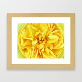 Macro Flower Photography ~ Sunny Yellow Rose with Petals & Stamens Framed Art Print
