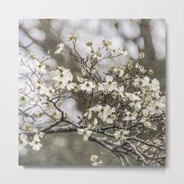 Spring Botanical -- White Dogwood, 2016 Metal Print