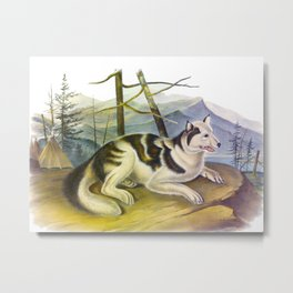 Hare-Indian Dog Metal Print