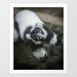Lemur In The Glass Art Print