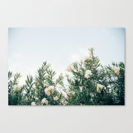 Neutral Spring Tones Canvas Print