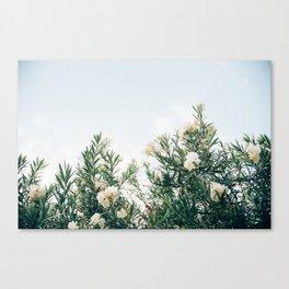 Neutral Spring Tones Canvas Print