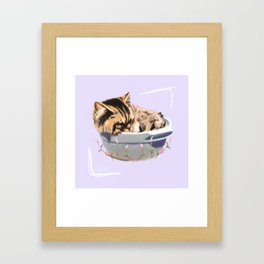 Cat in a Bowl Framed Art Print