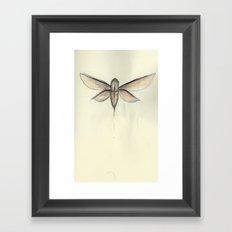Moth [[ 2 ]] Framed Art Print