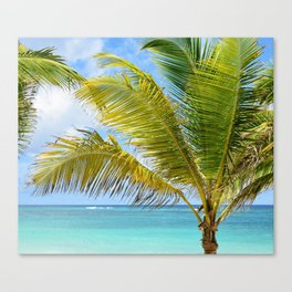 Photo 54 Palm Tree Canvas Print