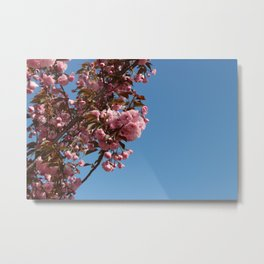 Cherry Blossoms 2 Metal Print