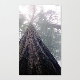 Awesome Redwood Canvas Print