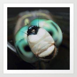 Cool Dragonfly Close-up Blue Darner Art Print