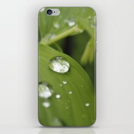 Green Leaves After Rain iPhone Skin