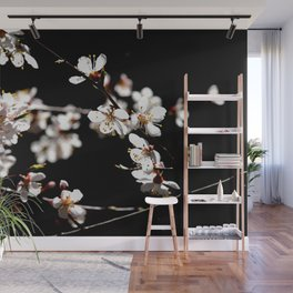Marvelous Japanese Apricot Flowers. Play Of Light And Shadows. Black Background Wall Mural