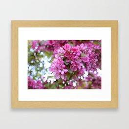 Deep pink blossom Framed Art Print