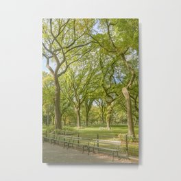 American Elms, Central Park Metal Print