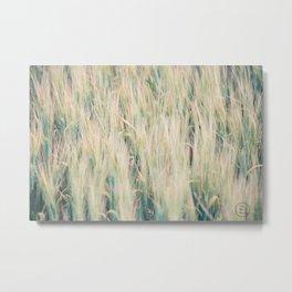 Summer Wheat 4 Metal Print