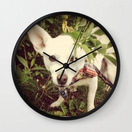 Looking Lobo Wall Clock