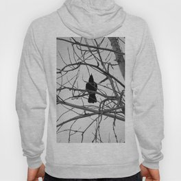Bird's Eye View Hoody